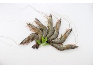Q彈鮮草蝦12尾